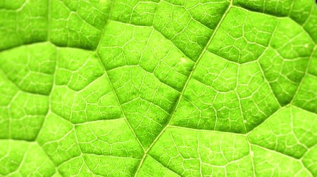 зелень : Macro shot of green leafs and plants been analyzed