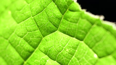 Тропический климат : Macro shot of green leafs and plants been analyzed