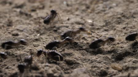 szervez : Close up of ants running and moving in various directions