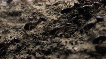 Close up of ants running and moving in various directions