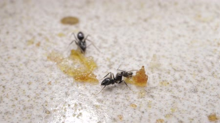 Ant and sugar grains