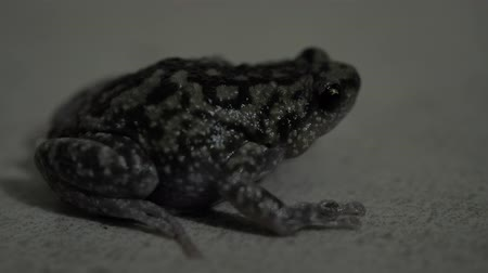 Close up of a living toad