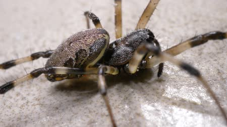 уродливый : Close up of a creepy spider moving slowly