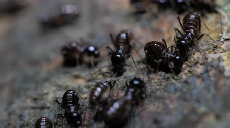 haşarat : Close up of ants running and moving in various directions