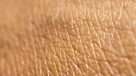 Close up of Human Skin Texture