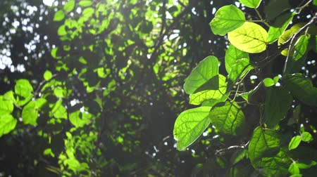 Green Plants And Trees
