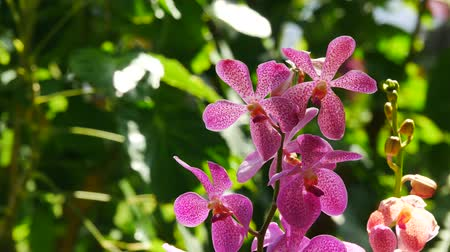 hybrids : Colorful orchid in a park