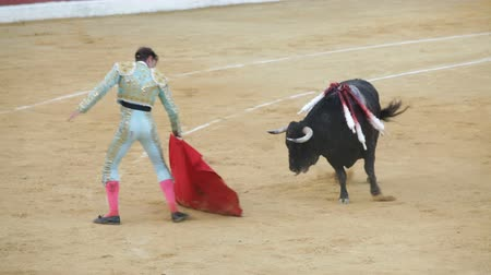 spaniard : La Linea de la Concepcion, Spain - July 19: Spanish matador provokes bull during traditional bullfighting on July 19, 2013 in La Linea de la Concepcion, Spain.