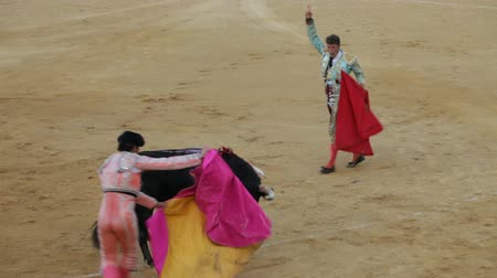 bullfight : La Linea de la Concepcion, Spain - July 19: The final stage of bullfighting. Spanish matador sticks sword to the bull and bullfighters kill the bull on July 19, 2013 in La Linea de la Concepcion, Spain.