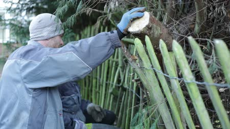 yards : Professional gardeners pruning trees in winter.