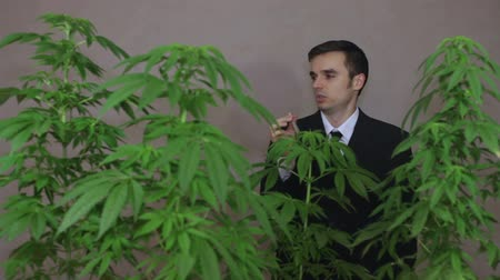 possession : Businessman with Cannabis plants smoking Marijuana joint.