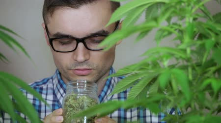 альтернатива : Happy salesman growing Cannabis plants and smelling dry Marijuana products.