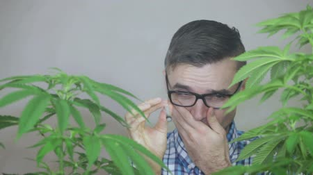 possession : Funny stoned man smoking Marijuana joint and coughing. Stock Footage