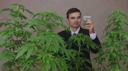 possession : Successful businessman with Cannabis plants smoking Marijuana joint. Stock Footage