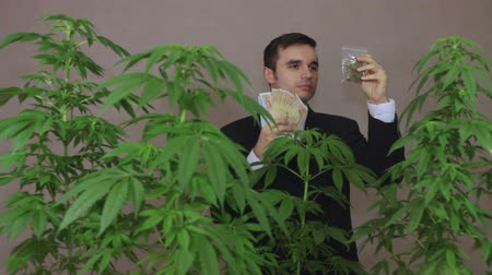 smell : Successful businessman with Cannabis plants and Marijuana products enjoying earned money.