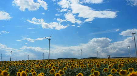 many windmills rotating during windy summer cloudy day on yellow field with sunflowers