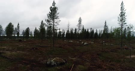 silvicultura : Finland, forest in Lapland with a open field where deforesting has taken place on a summer or autumn day