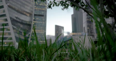view of Moscow City from the side of trees and grass