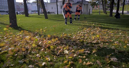 derinlik : Beautiful autumn leaves removed