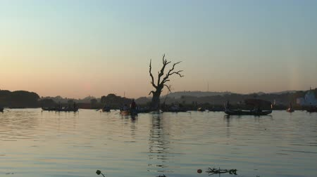 u boats : Tamarind tree in Taungthaman Lake, Amarapura, Mandalay, Myanmar