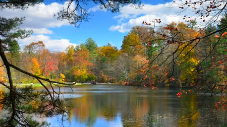 lapse : Serene lake timelapse in the fall  at Pine Grove Forrest State Park, Pennsylvania, USA time lapse
