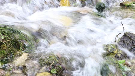 torrente : Swiftly flowing clear water in shallow cold forest creek with stony bottom Vídeos