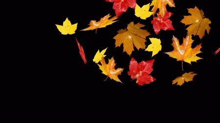 folhas : falling leaves right direction alpha