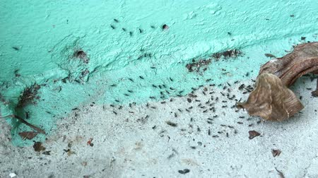 fészek : Ant moving nest with ant army