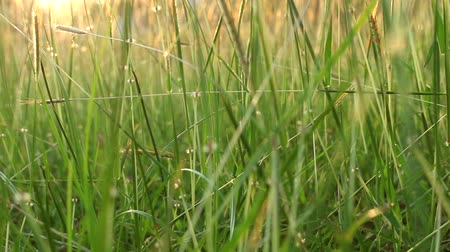 soccer field : grass field background Stock Footage