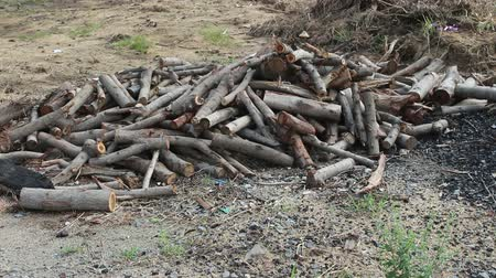 silvicultura : group of firewood Stock Footage