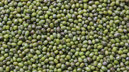 soy : green bean seed rotation Stock Footage