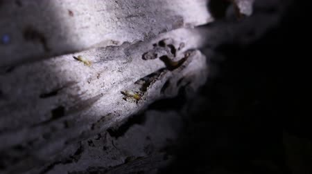 termite : Termites in the nest Stock Footage