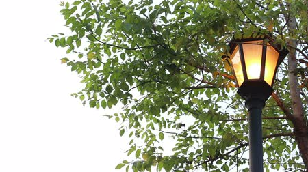 sokak lâmbası direği : street light under trees Stok Video