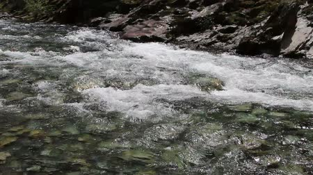 strumień : Rapids On North Fork Of American River Near Colfax California Stevens Trail Wideo
