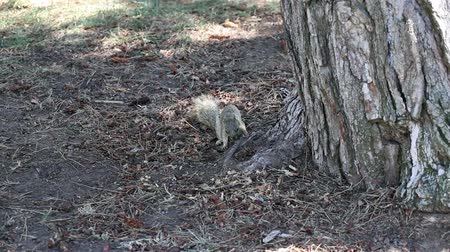 roedor : Squirrel Sitting In Shade Of Tree Trunk