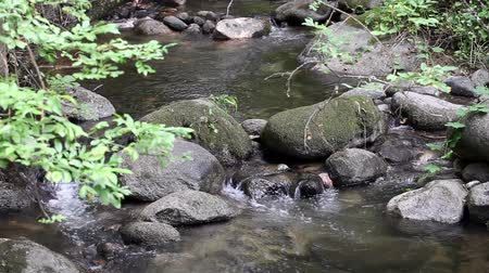 folha : Small Creek Flowing Over Rocks Towards Camera