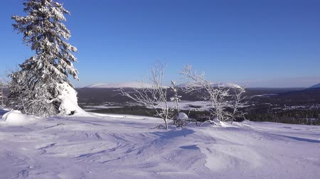 coldness : Strong wind on winter day at the top of a mountain in Finnish Lapland with snow floating on the ground and tree branches waving in the wind Stock Footage