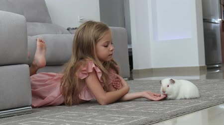 świnka morska : little girl plays with a white guinea pig on the floor at home