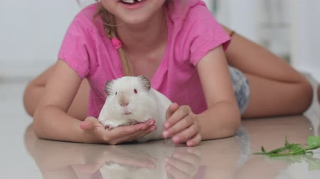 świnka morska : blonde cute girl without milk tooth plays with a domestic rat on a blurred background at home