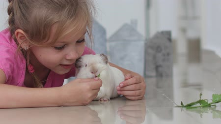 świnka morska : Beautiful blue-eyed little girl 6 years old with a pet cavy at home