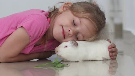 świnka morska : Side view child little girl plays strokes guinea pig pet lying on the floor