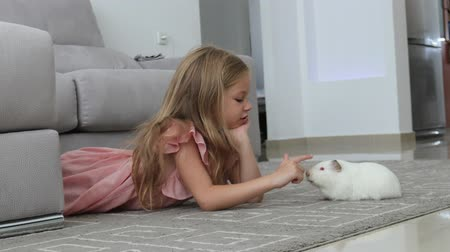 guinea pig plays with a girl, a girl lies on a gray carpet playing with a cute white guinea pig