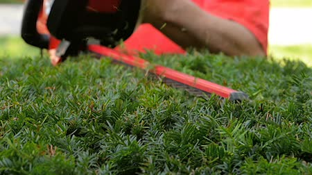 sıkıcı iş : Hedge trimmer closeup