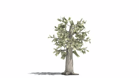 pieniądze : 1080p HD video of a money tree sprouting from a penny and growing into a tree. Wideo