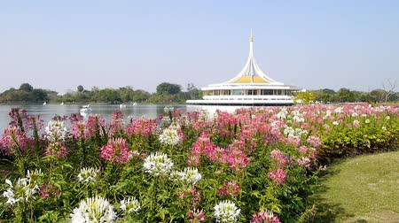 prominent : Tilt up shot from flower to Pavilion. Suanluang RAMA 9 public park, Bangkok, Thailand