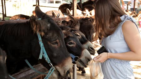 acariciando : Beautiful girl feeds donkeys food in the reserve