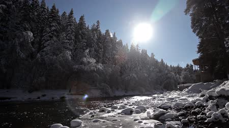 карпатская : Winter mountain river surrounded by trees and banks of snow-covered
