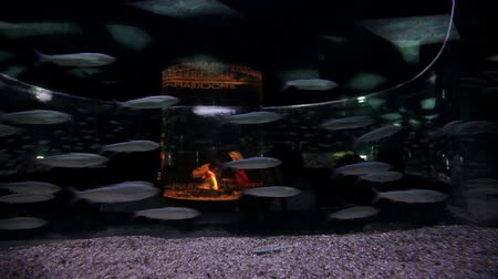 экзотичность : Fish swim in the aquarium. Tunnel under water. Marine life underwater