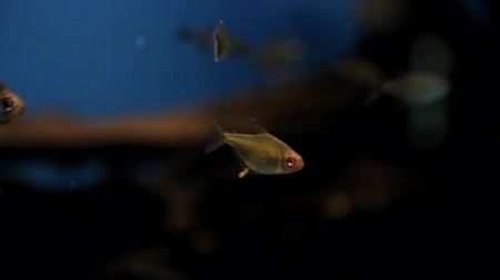 limpid : Filming under water, a beautiful sea world, rare, exotic fish. Ocean diving Stock Footage