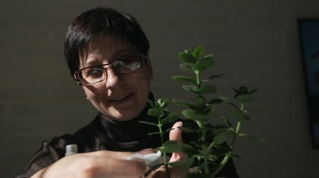 ficus : Woman wipes the dust off the flowers Stock Footage